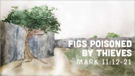 Figs Poisoned by Thieves