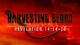 Harvesting Blood