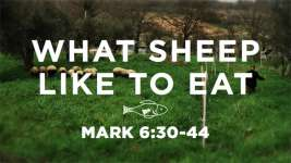 What Sheep Like to Eat